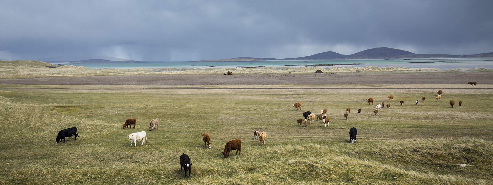 The peninsula is common grazing for Grenitote crofters cattle.