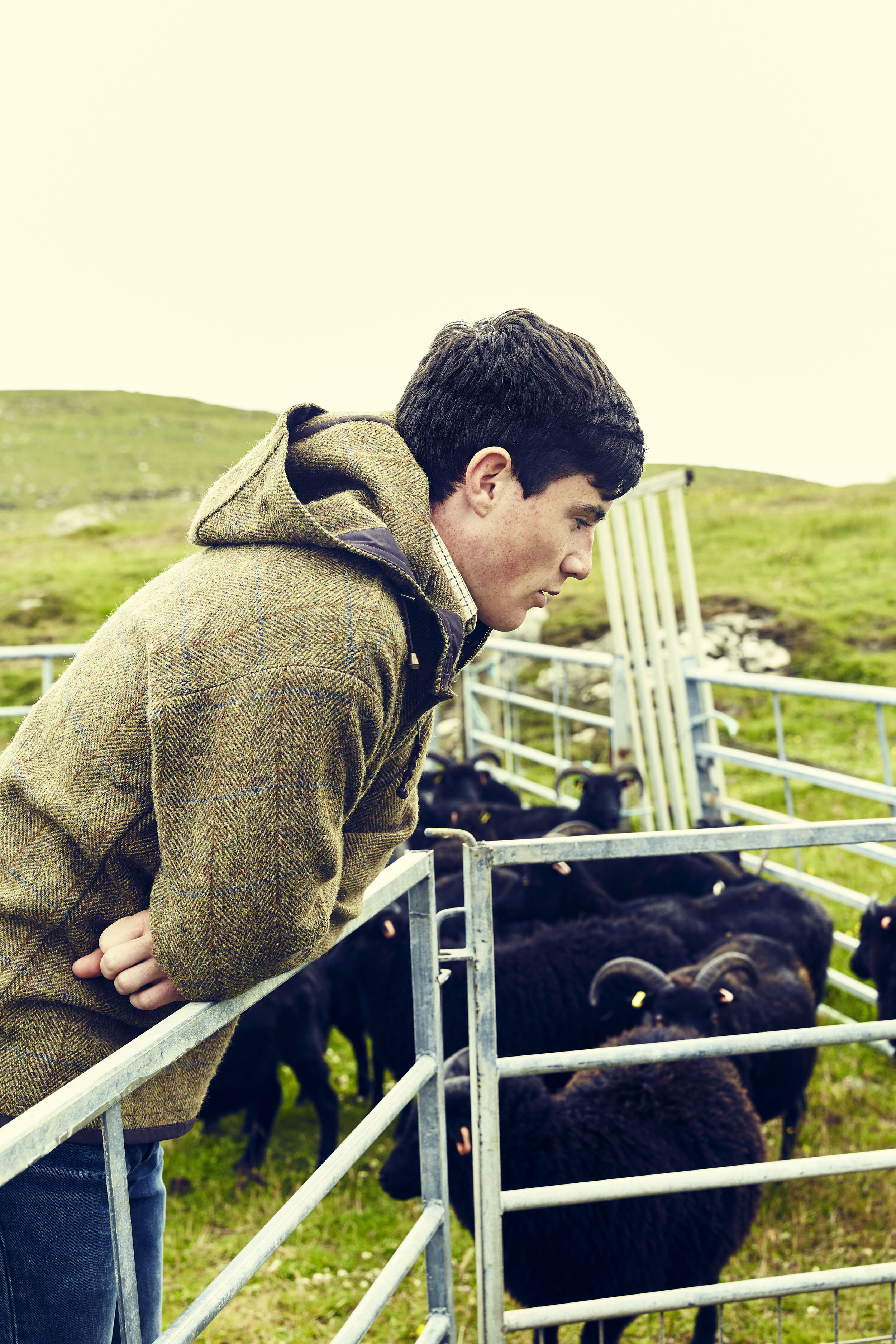 Hamish 'helping' to gather sheep on the croft.