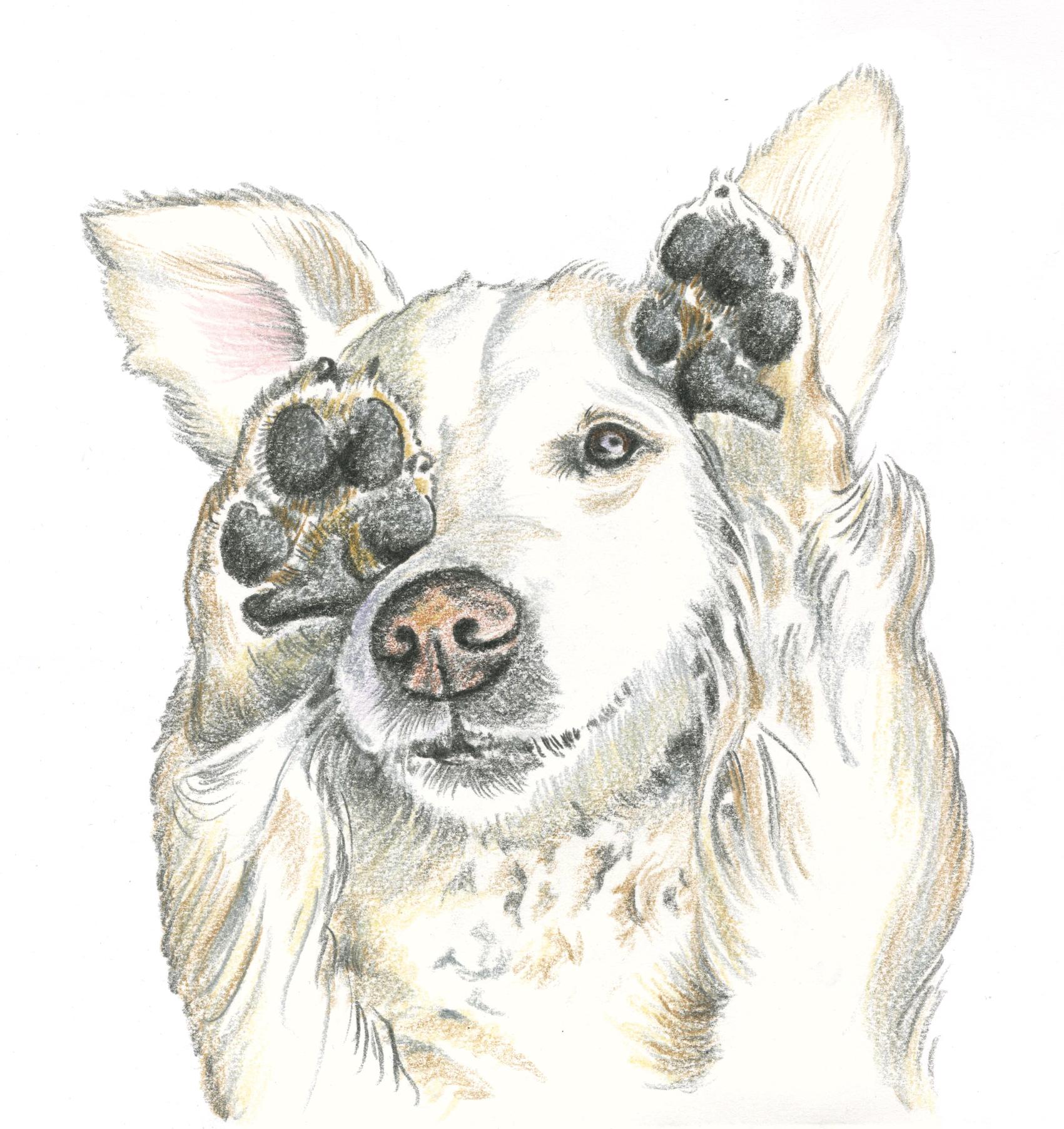 Hund 4f_1.jpg