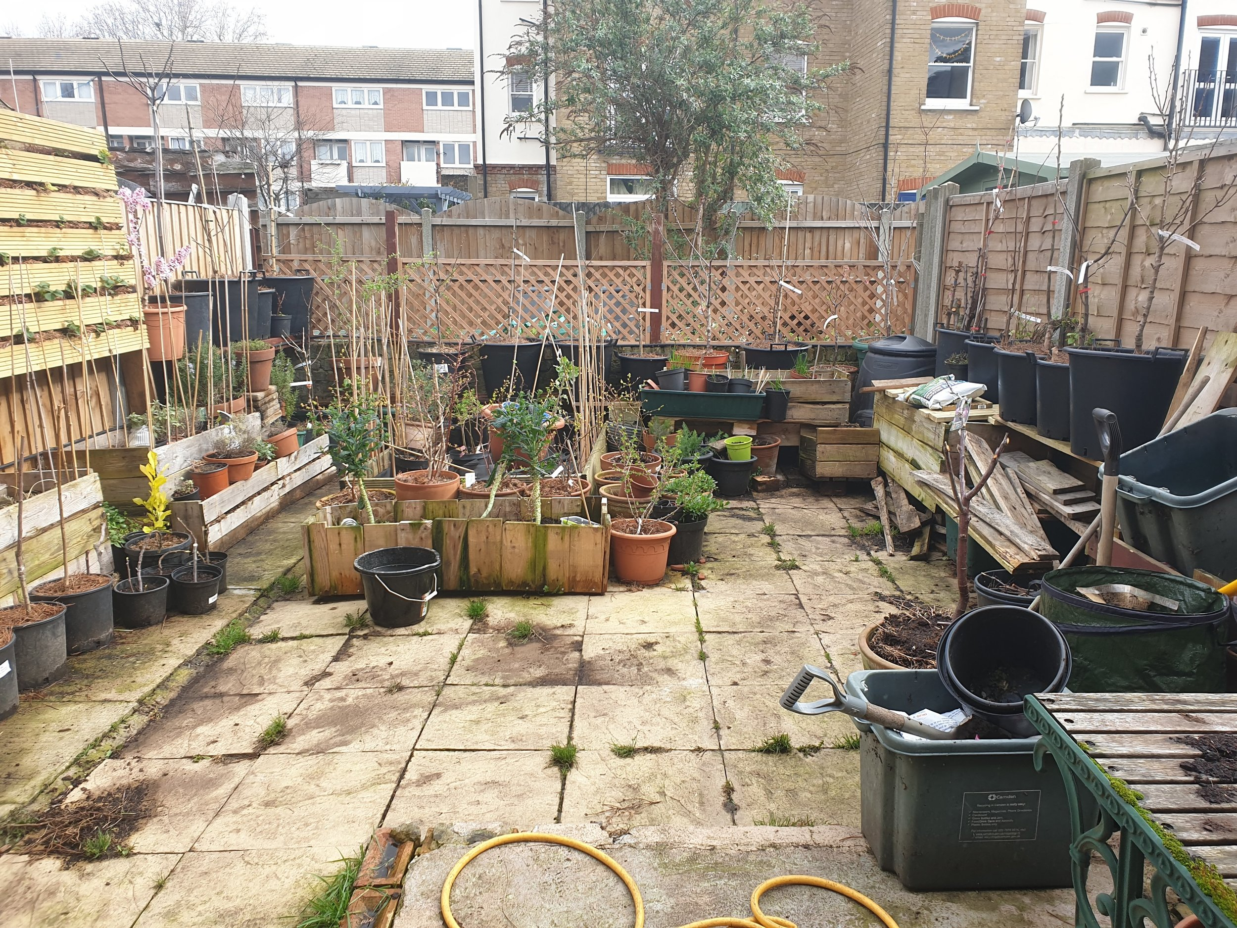 The 'urban orchard' site in our small London garden. The trees are in pots elevated on a small shelf at the back of the fence. This photo was taken in winter.