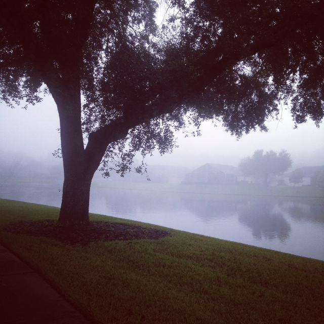 foggy tree.JPG