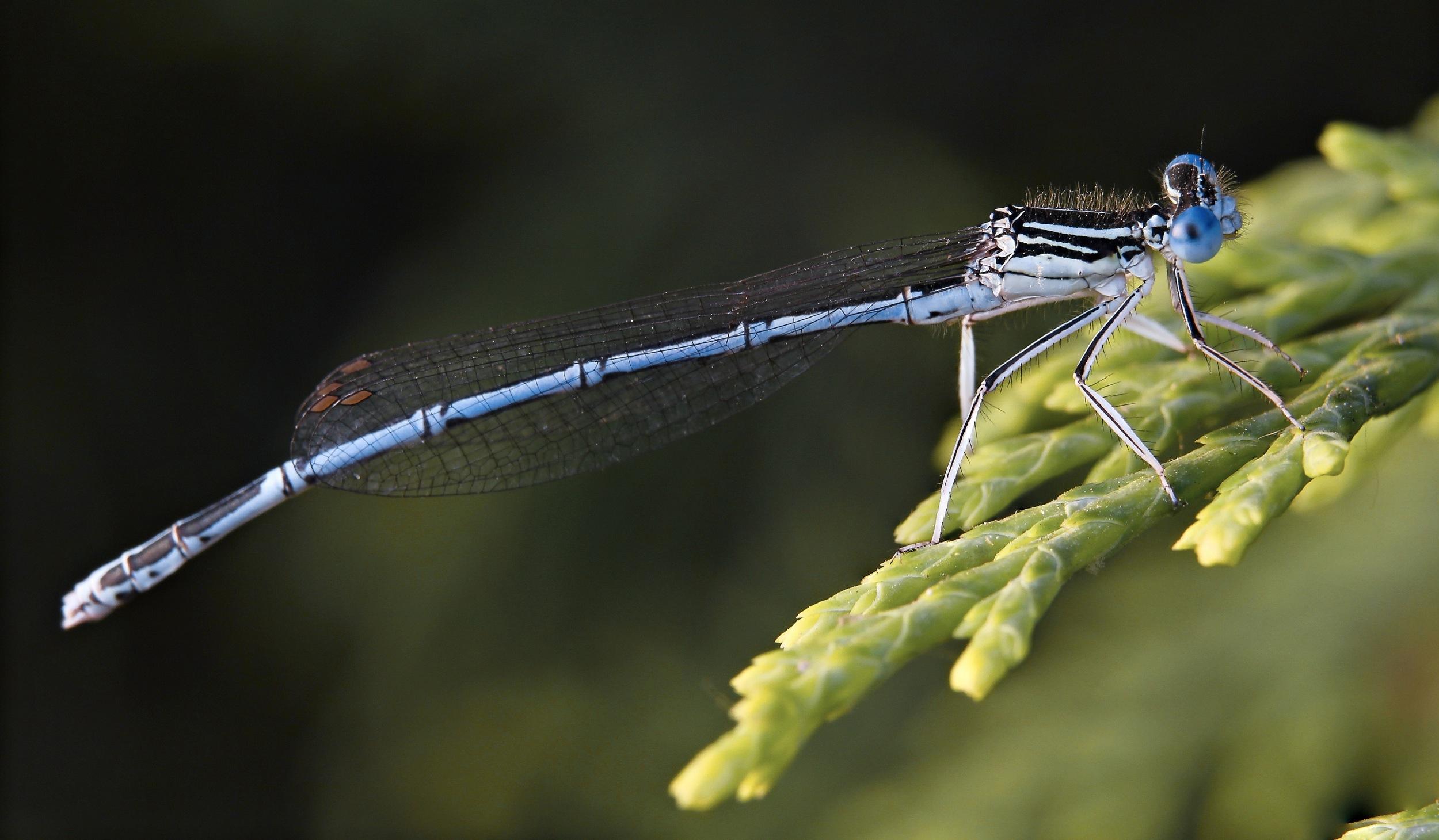 libellula.jpg