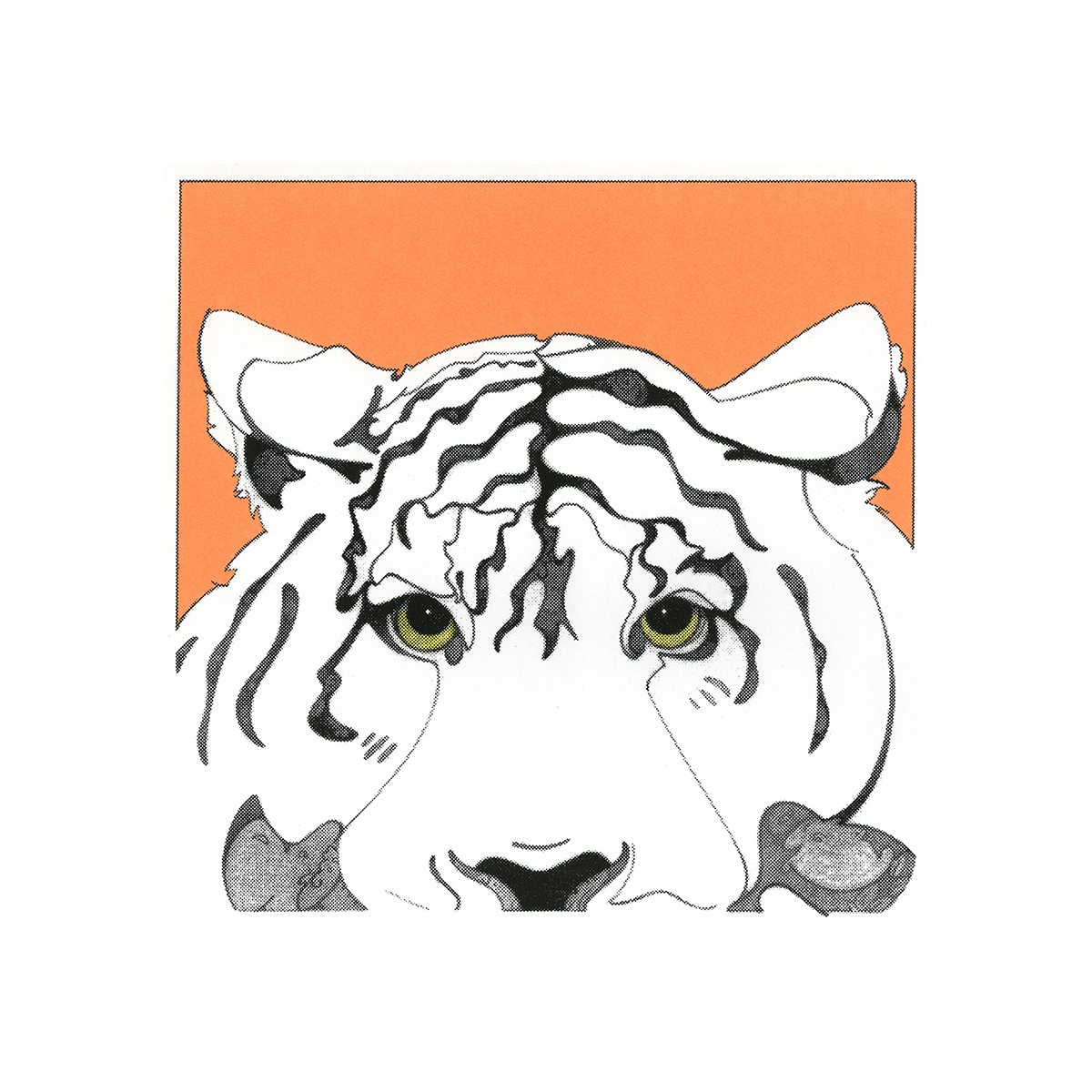 Evening Star (tiger), serigraphic print, copyrighted by Kathleen Zimmerman