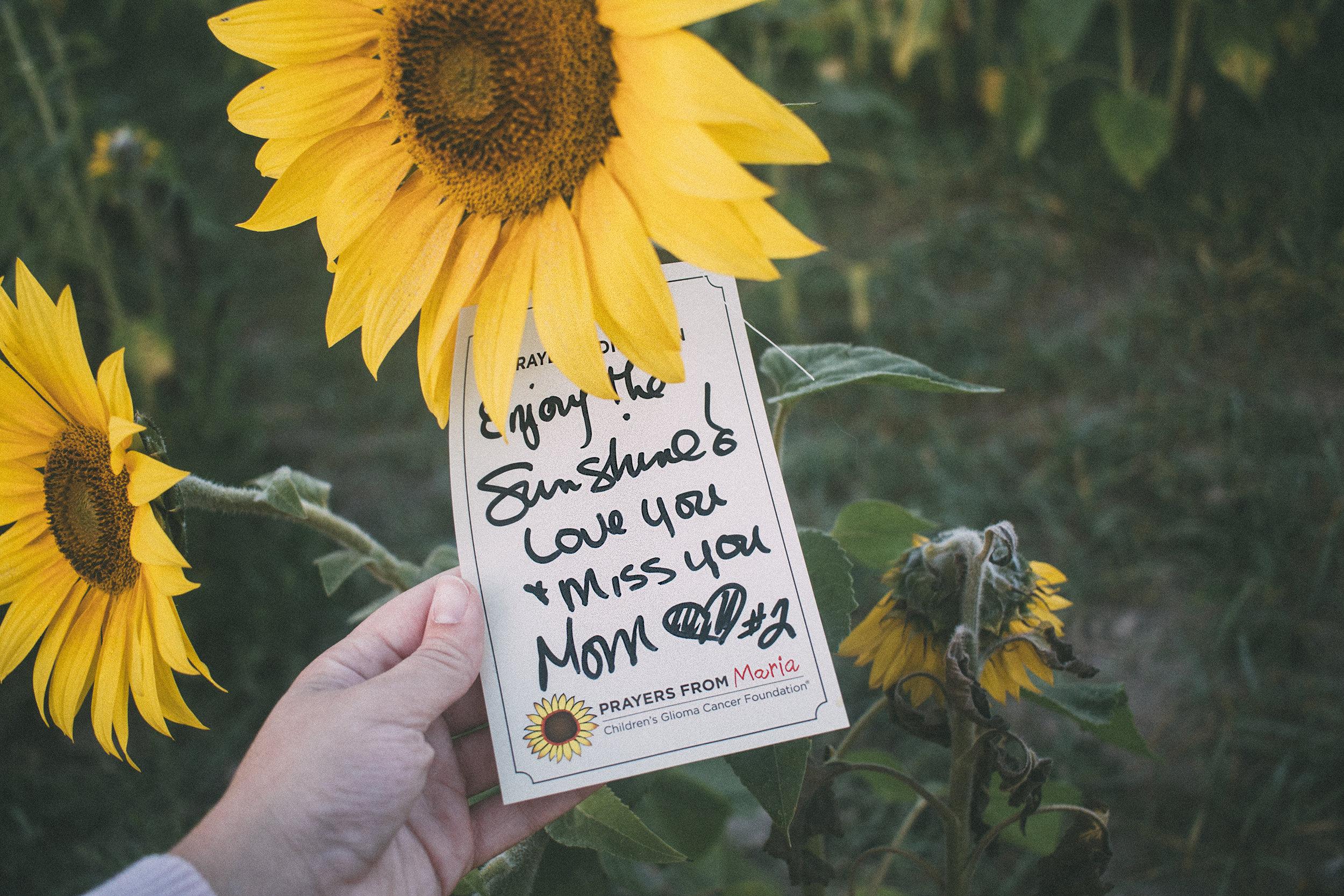 AvonOHSunflowers_09232017_061.jpg