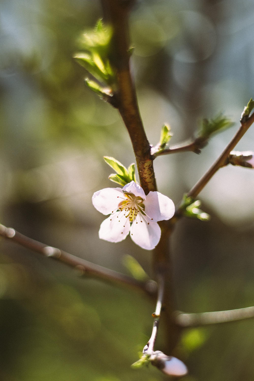 CherryBlossoms+Momo_05042018_001.jpg