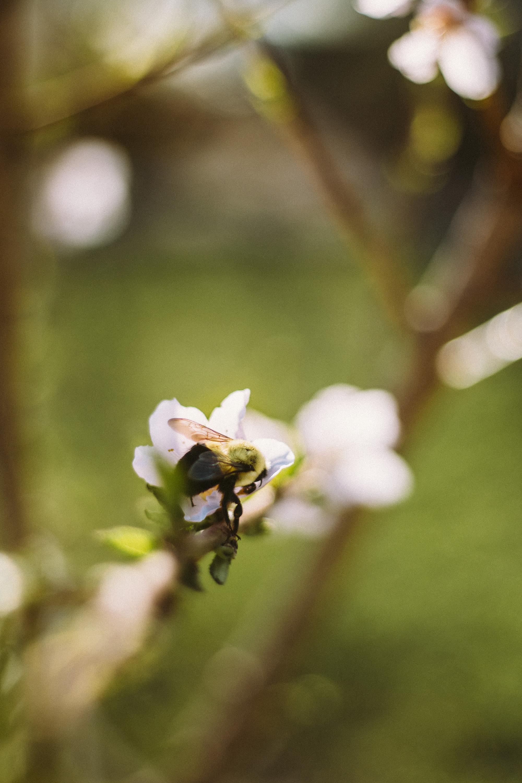 CherryBlossoms+Momo_05042018_018.jpg