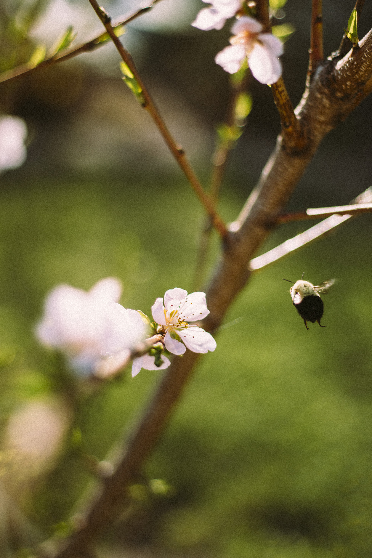 CherryBlossoms+Momo_05042018_020 copy.jpg
