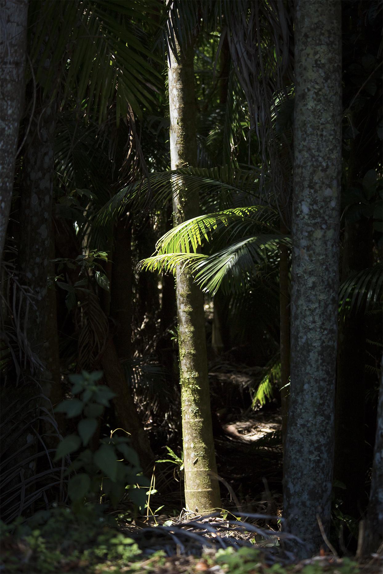 Australia538 LR.jpg