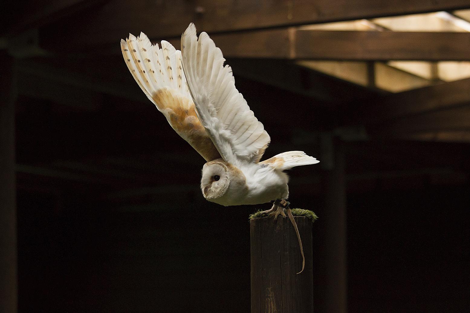 Owl9 lowres.jpg