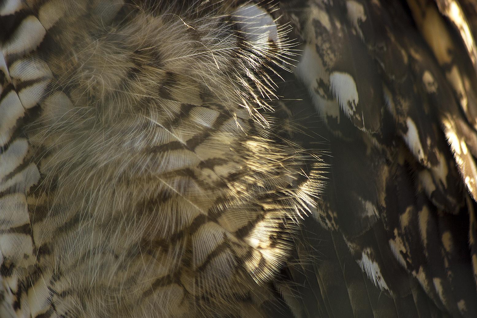 Owl10 lowres.jpg