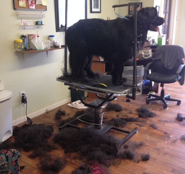 Professional grooming can do wonders for your double coated breeds! Let us handle the work and the mess, we don't mind one bit.
