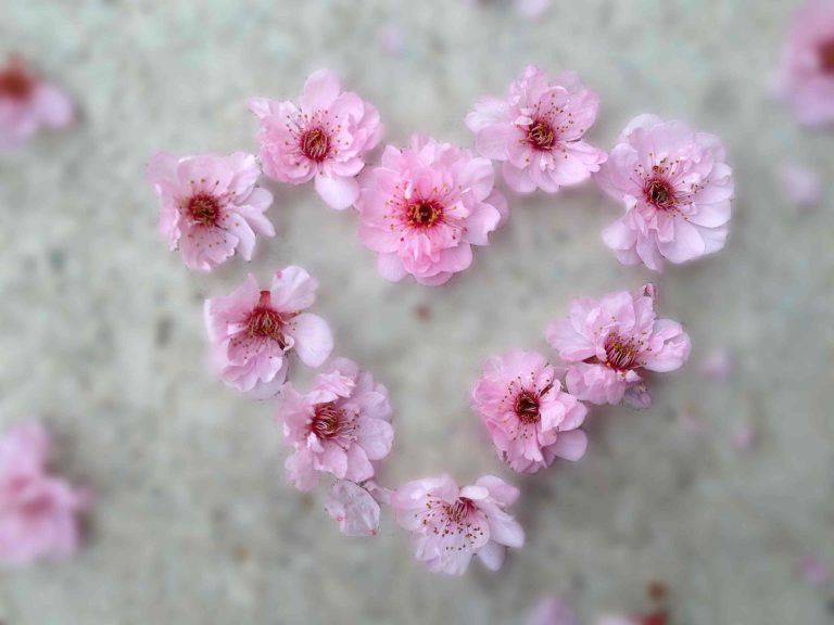 blossom-heart-low-res-768x576.jpg