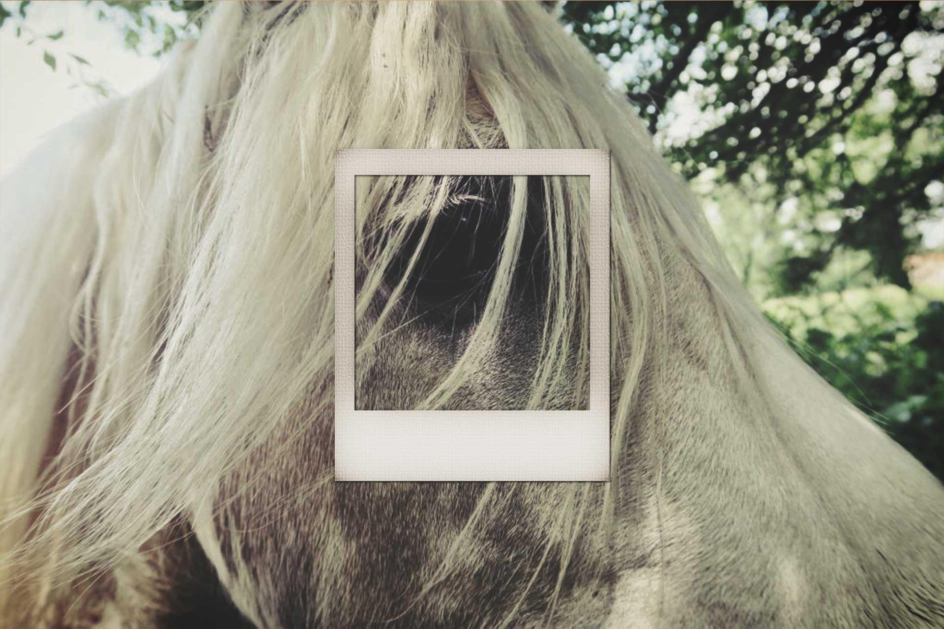 LN-polaroid-horse1.jpg