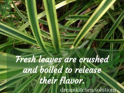 fresh-screwpine-leaves.jpg