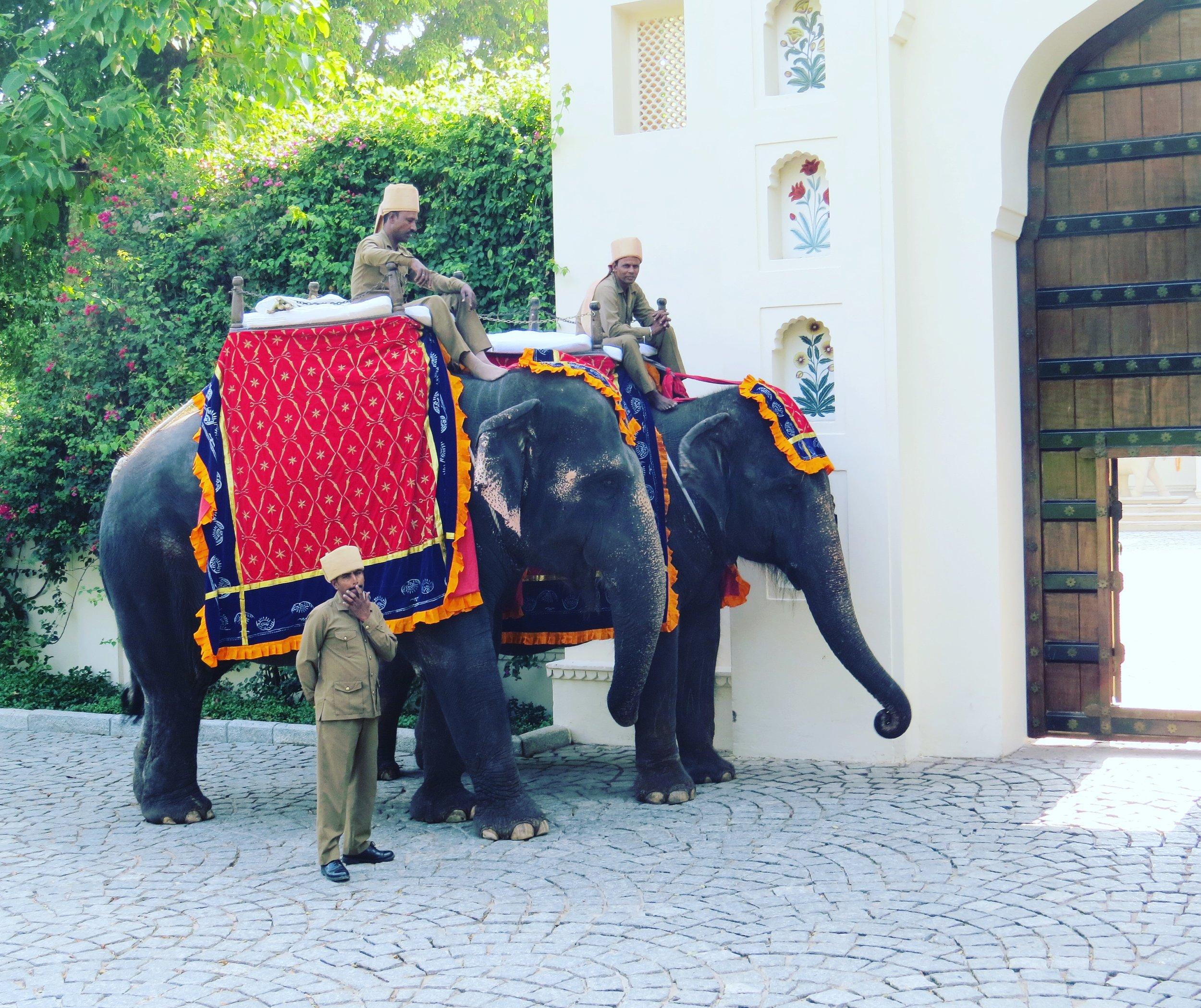 ELEPHANT RIDE, RAJASTHAN, INDIA