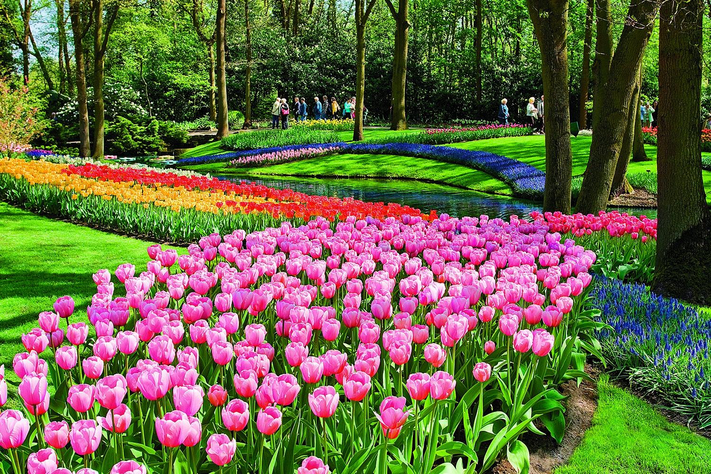 TulipTime_ss_73779124_Keukenhof_Holland_gallery.jpg