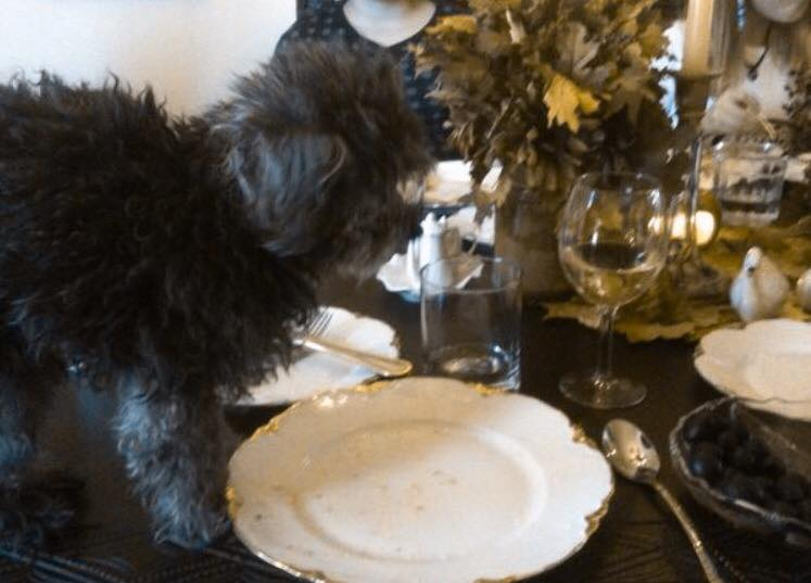 Thanksgiving 2012 - Ernie on the Thanksgiving table! Mom says I put him there? Maybe!