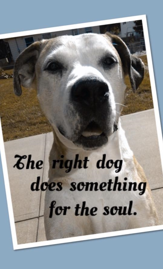 """""""The right dog does something for the soul."""" -Angela Hannah on her wonderful dog TJ, pictured"""