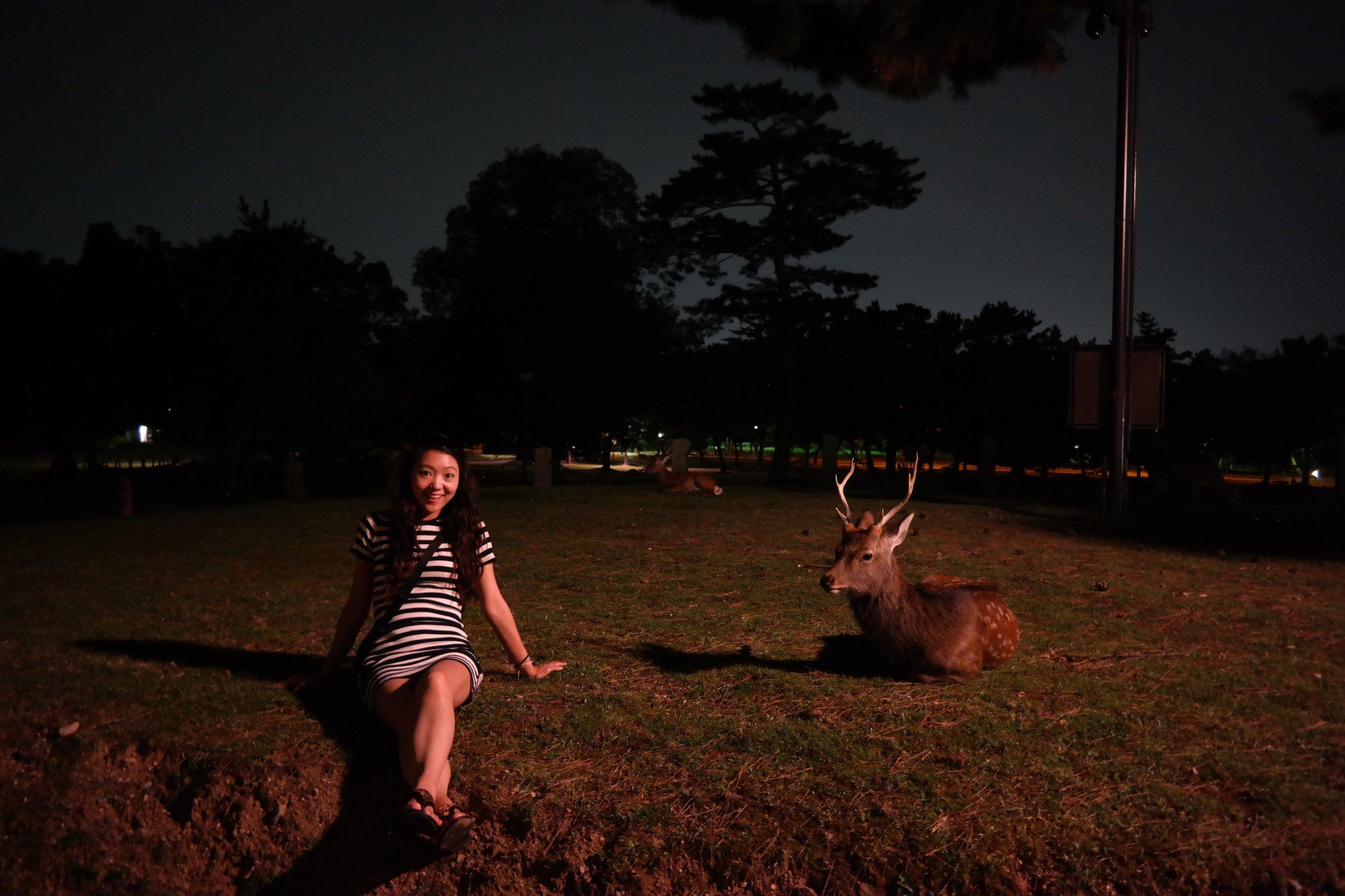 Deer park - Nara