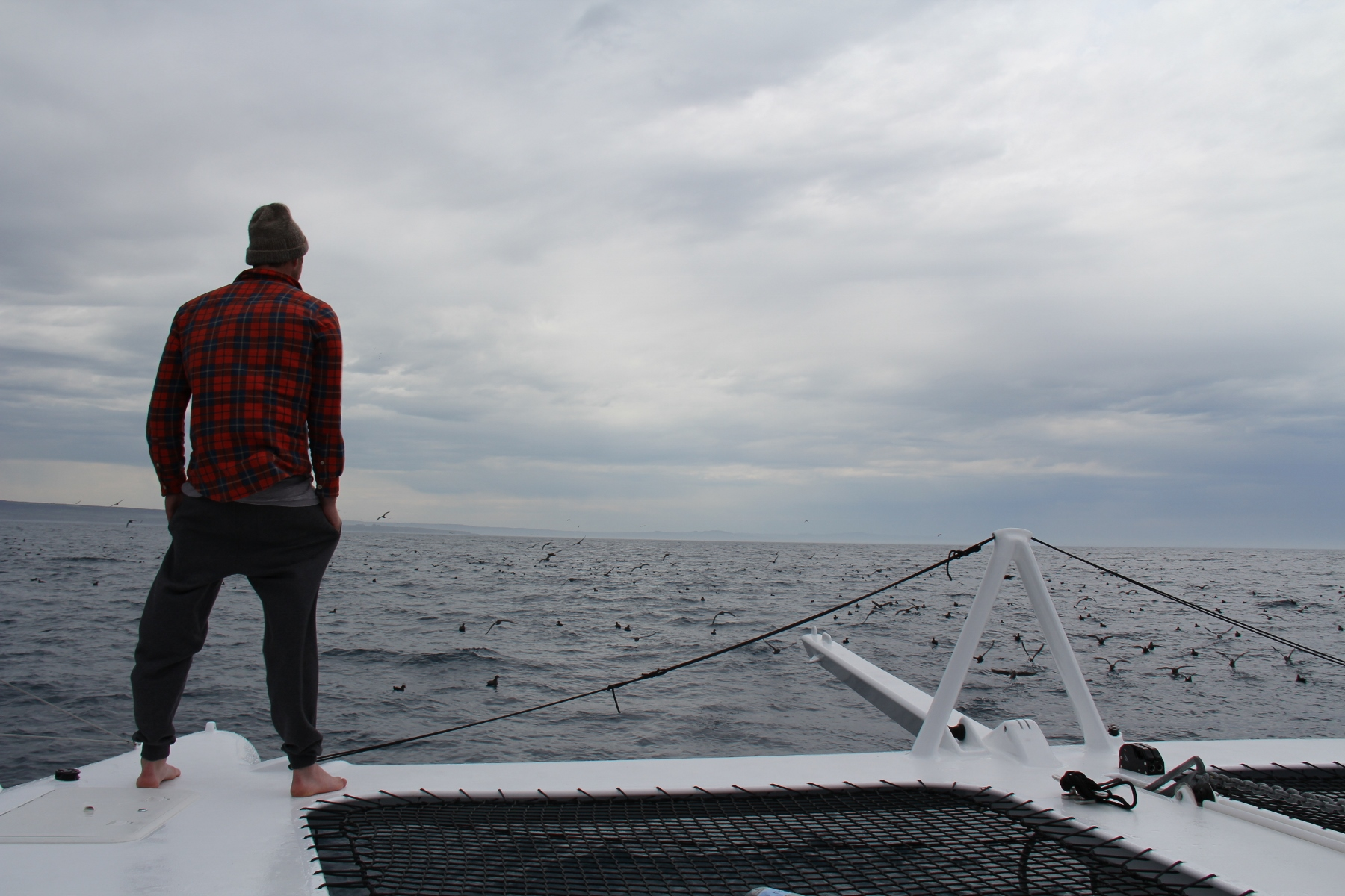 Benn on the bow as we motor into a flock of hundreds of birds.