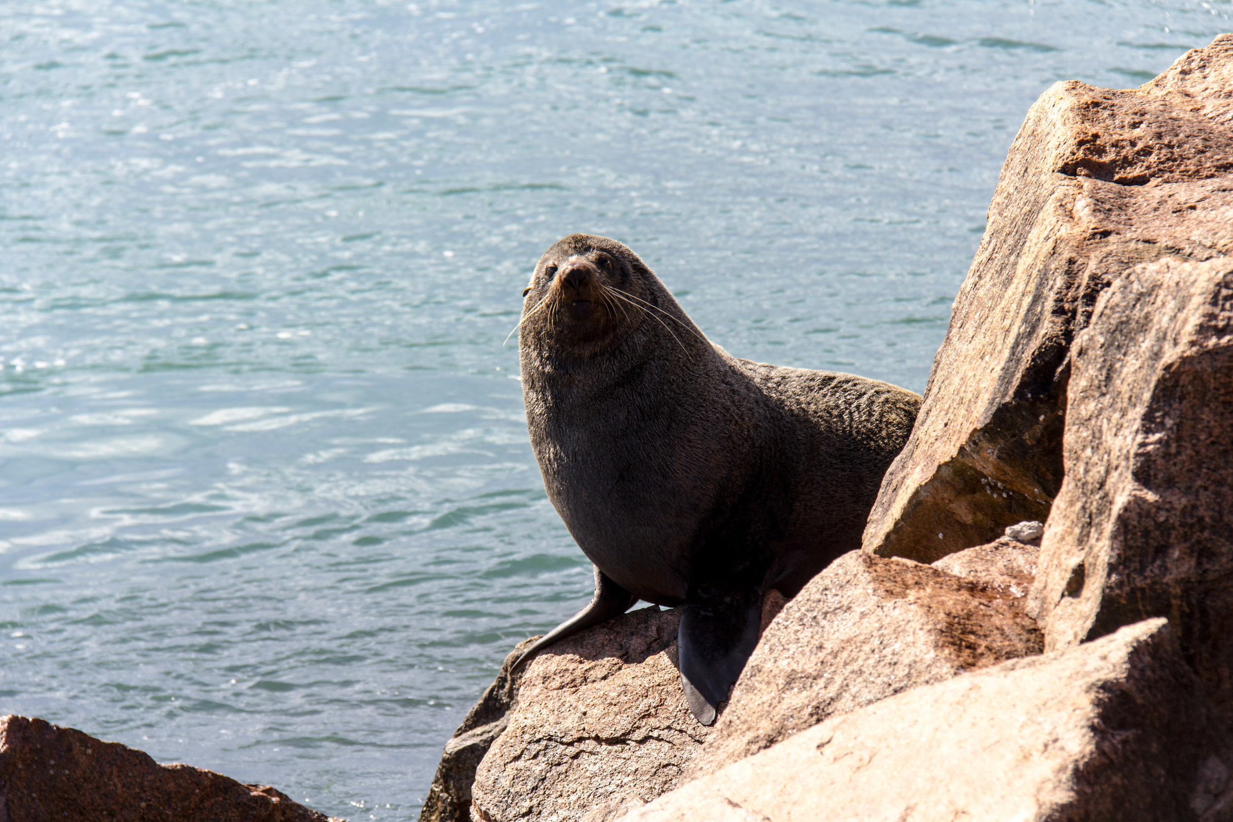 One of the sun baking seals i caught off guard at the Entrance ...