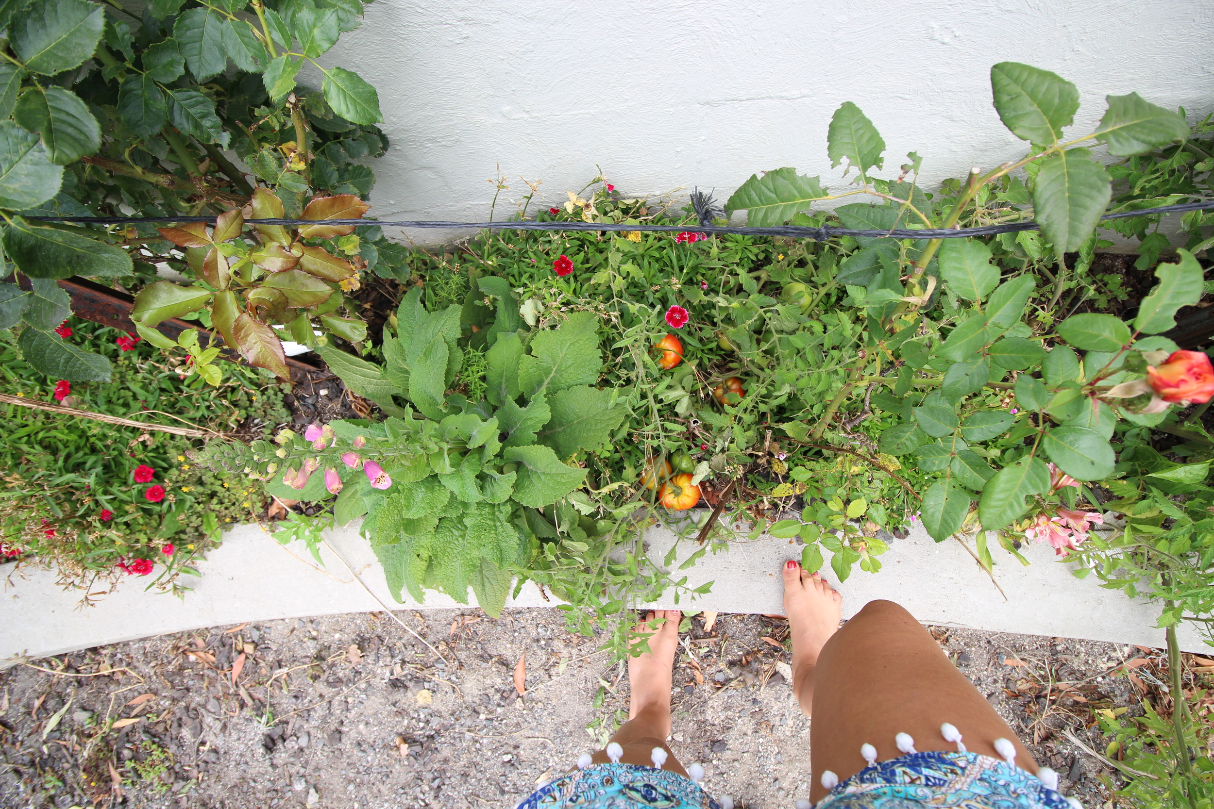 barefoot wandering through the garden, vine ripened tomatoes, herbs, and flowers. Mum and dads Garden is cottage style untamed and beautiful. There are hidden gems everywhere.