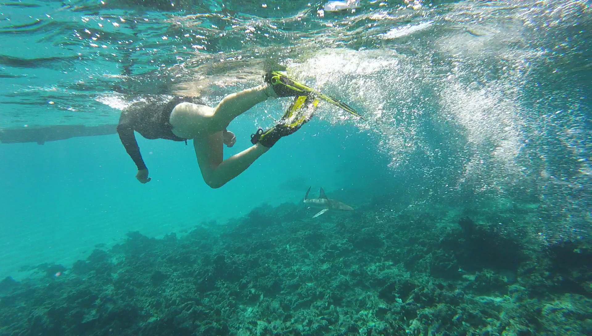 Swimming with sharks at Middleton reef