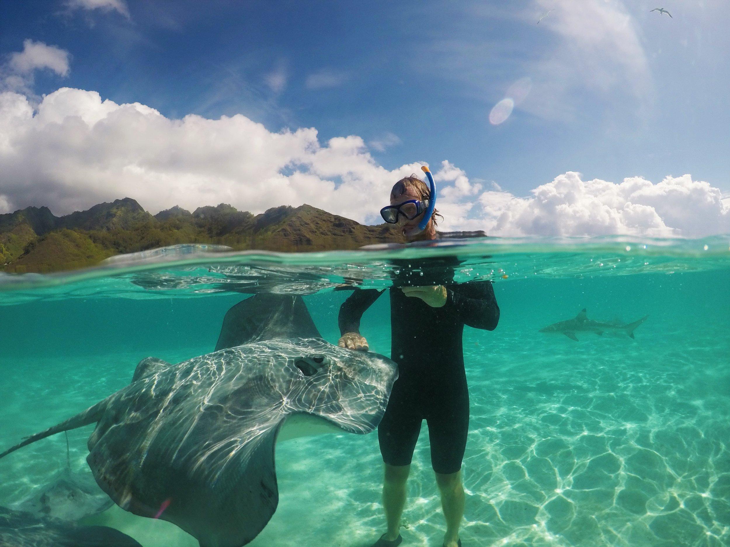 Michael feeding a friendly ray, as sharks circle