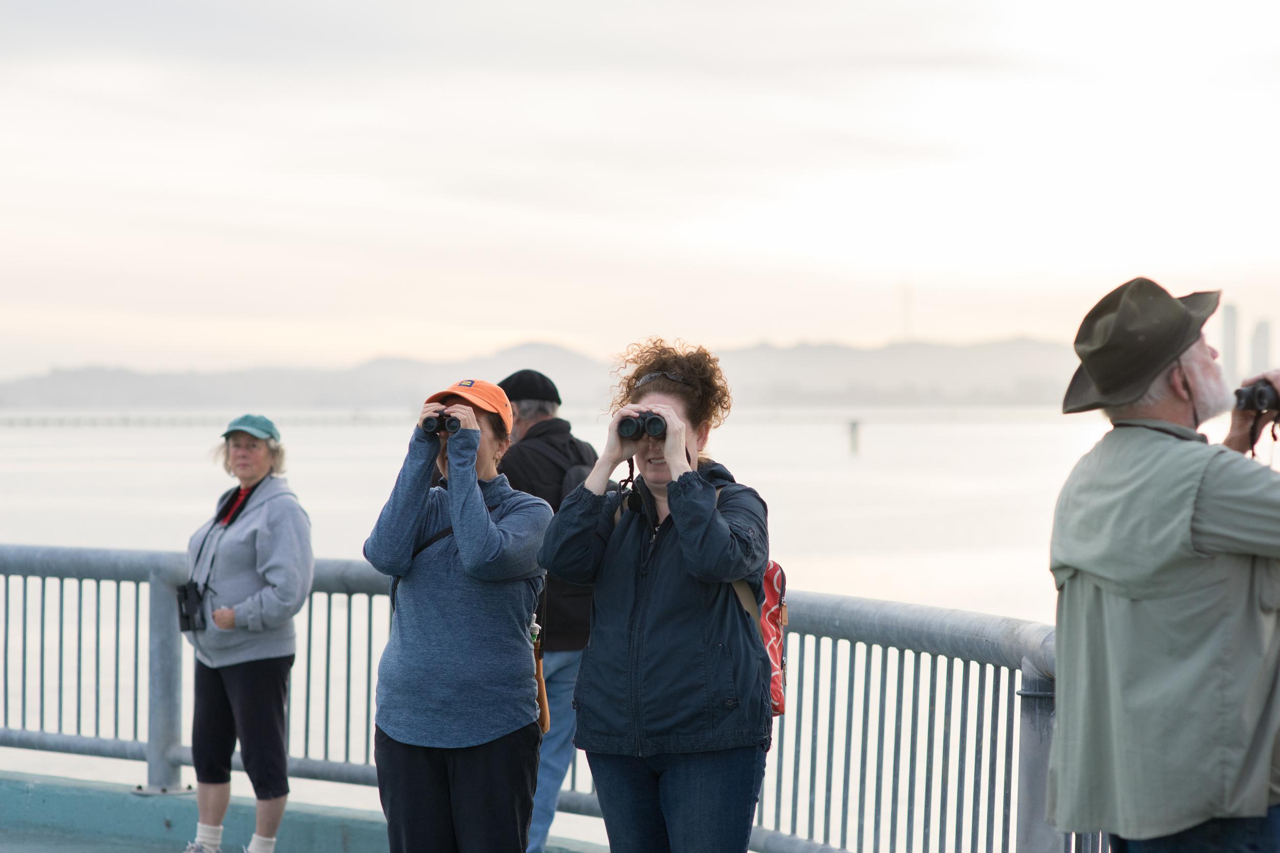 Even gulls are interesting! (Tony Iwane)