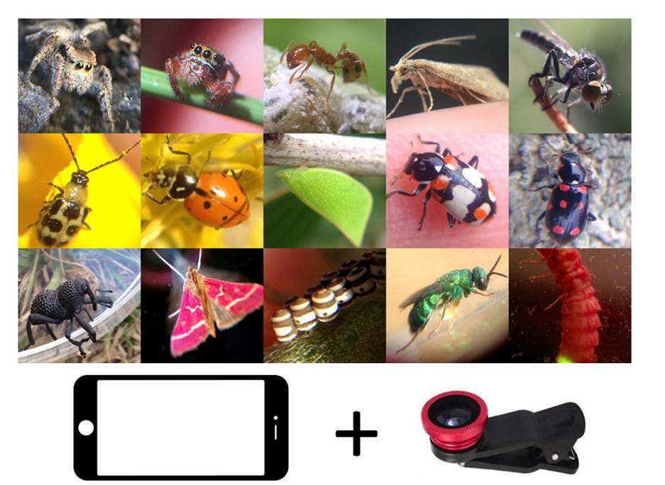 a few cell phone macro photos from the past year by workshop leader  Damon Tighe