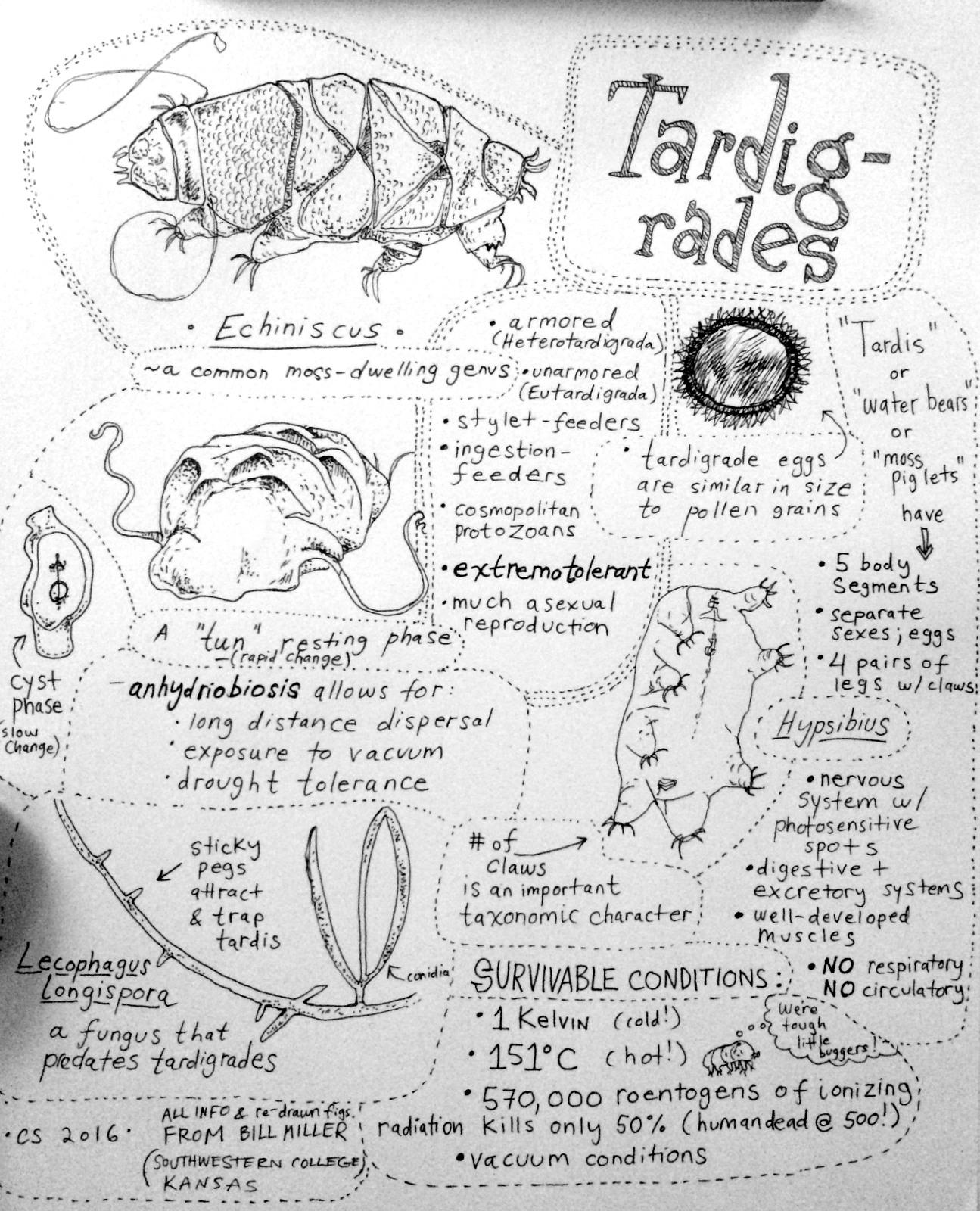 Christian Schwarz's notes on Tardigrade Biology