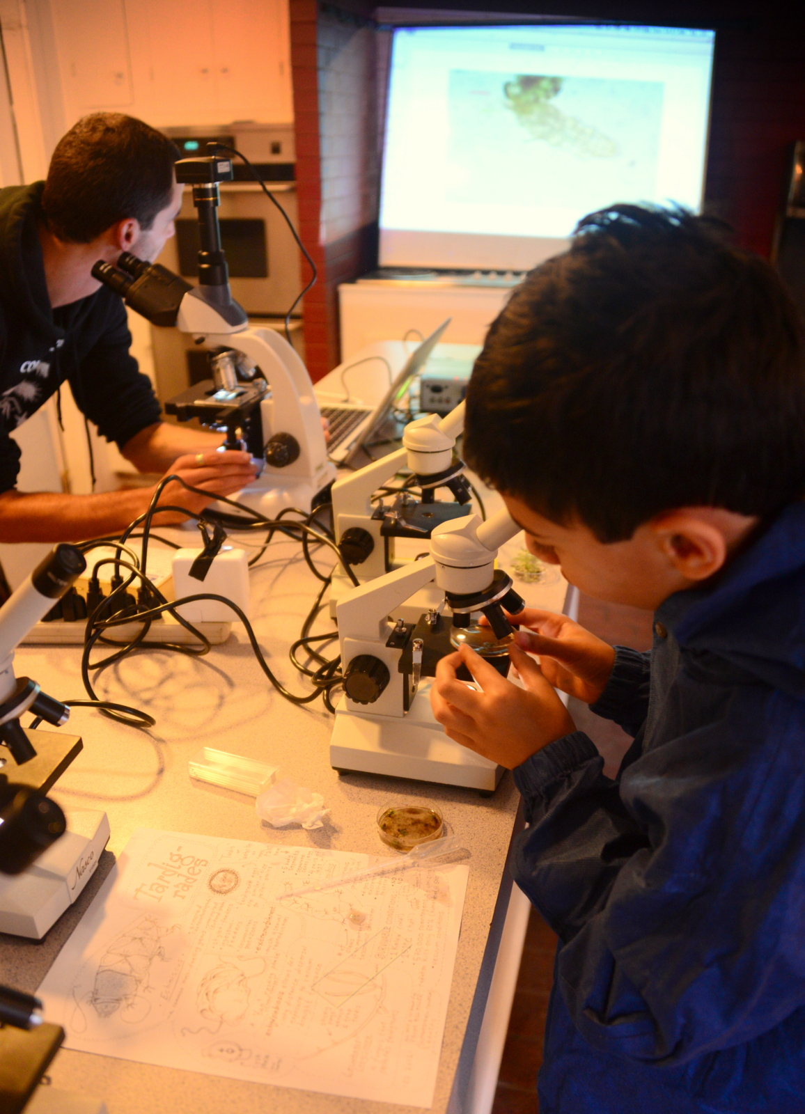 On the hunt for Tardigrades