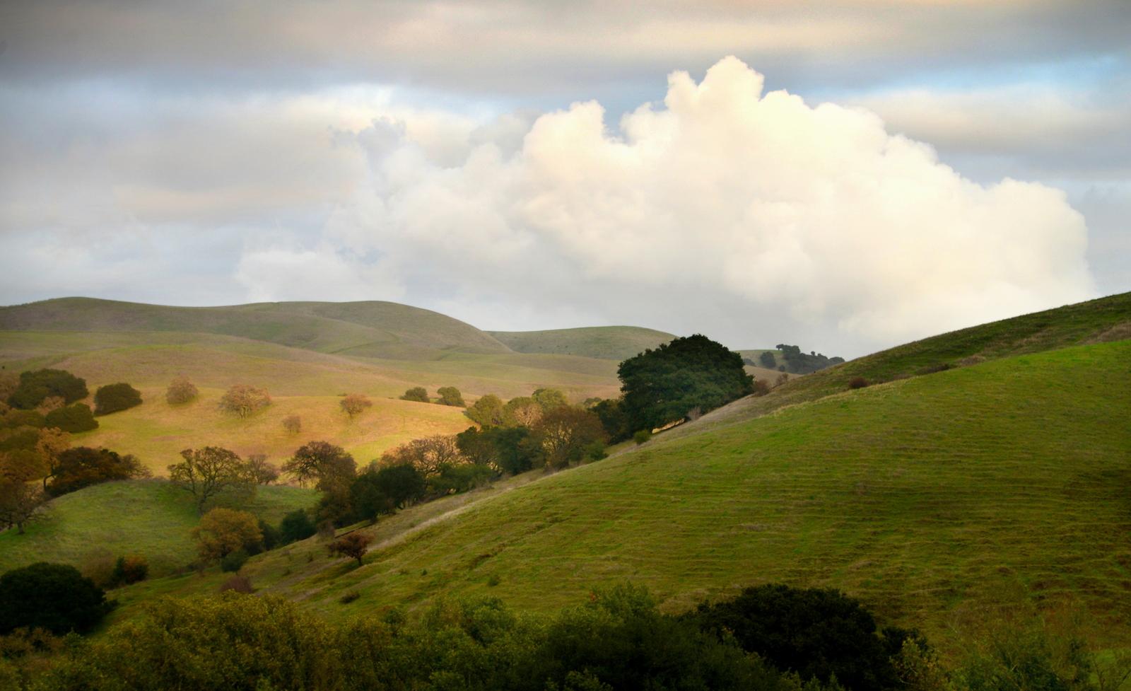 The Fernandez Ranch rolling hills and oak filled ravines