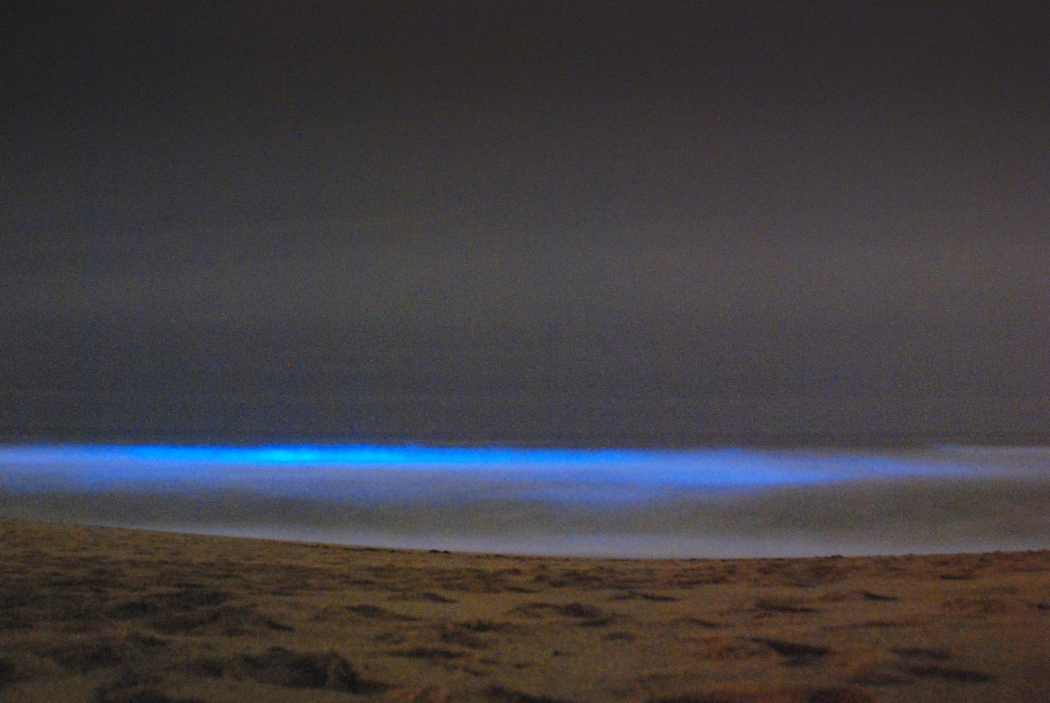 Bioluminescent waves, San Mateo. Photo by Damon Tighe
