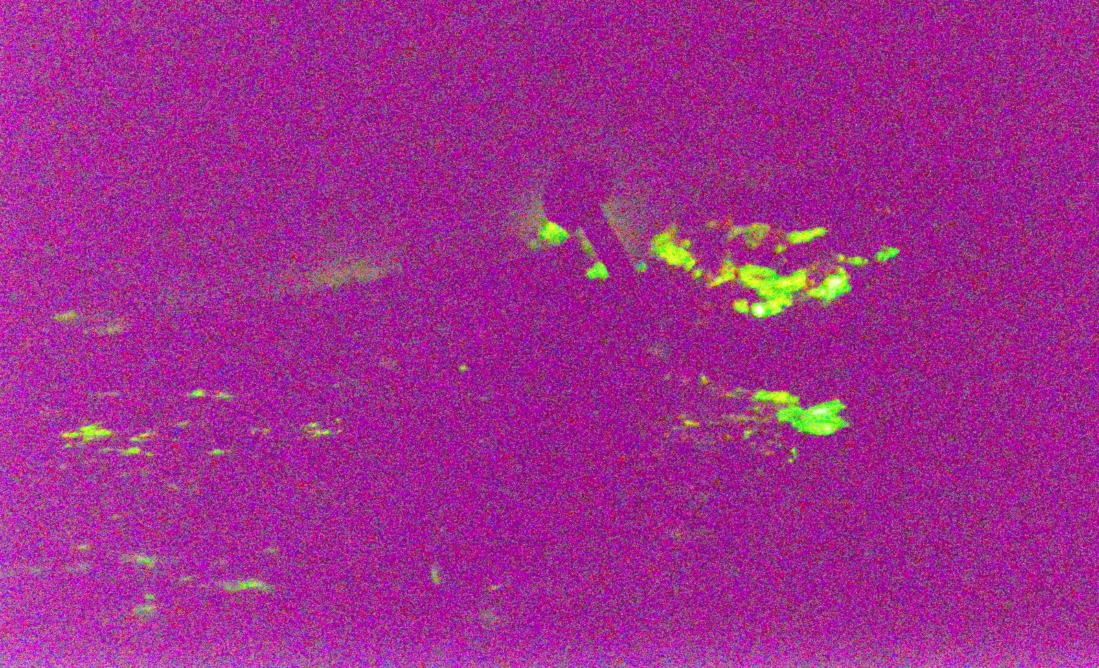Mycean haematopus mycelium glowing. Photo by Damon Tighe