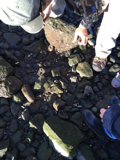 Heron's Head Park serves as an example of the incredible biodiversity of the Bay - flipping just one rock uncovers tens of species all sharing the same tiny habitat.
