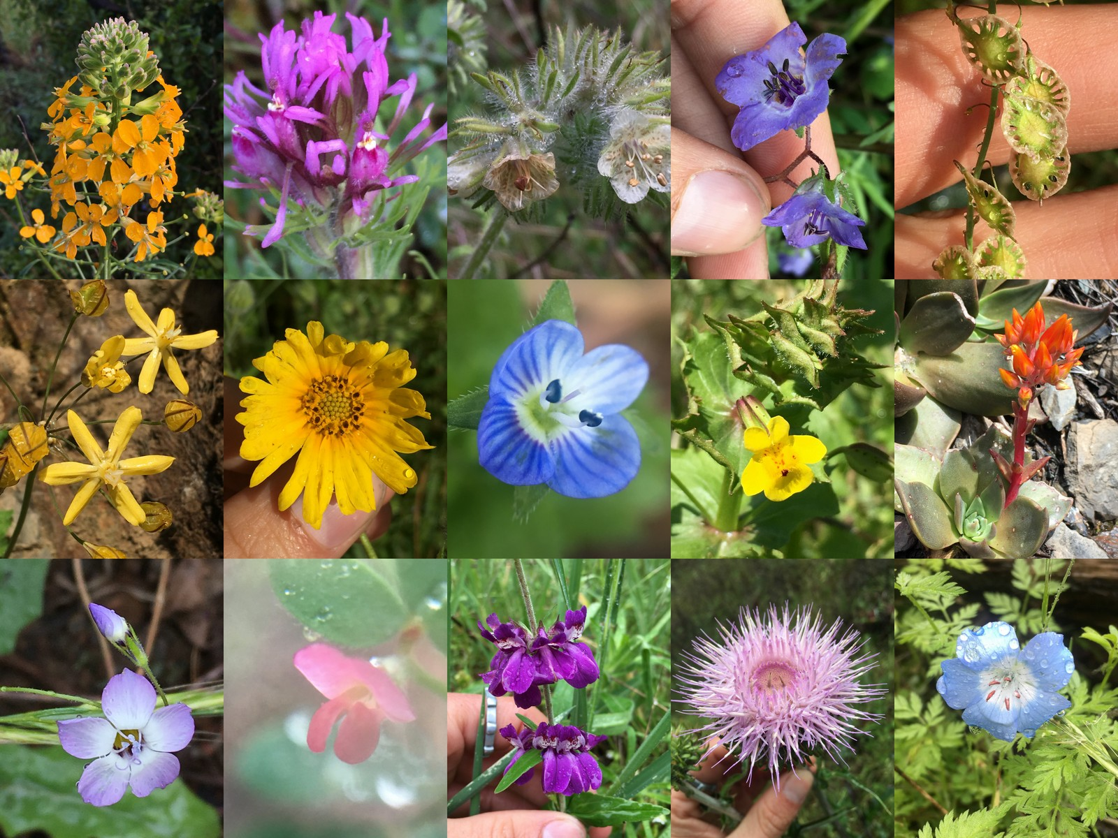 A few of the flowers