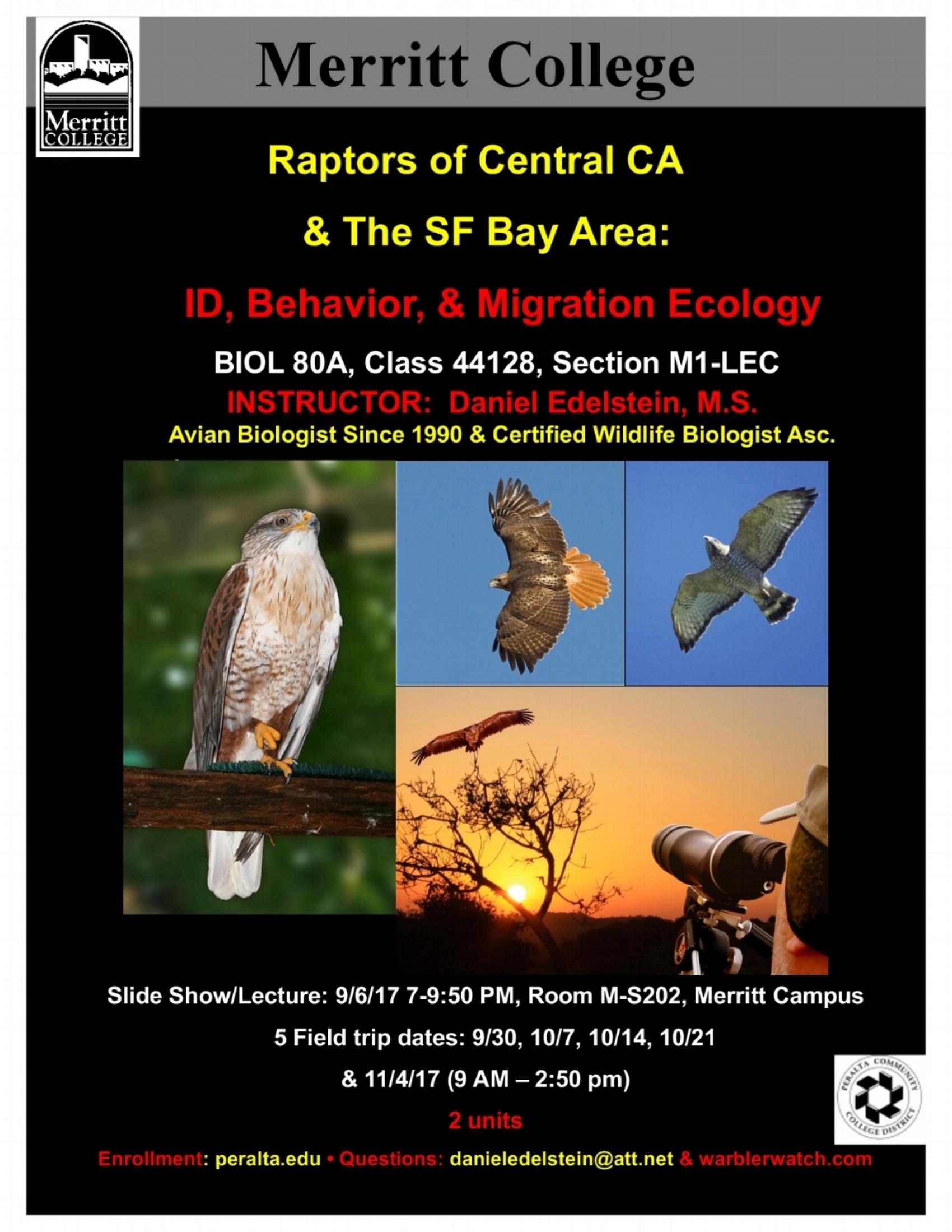 Raptors of Central California -