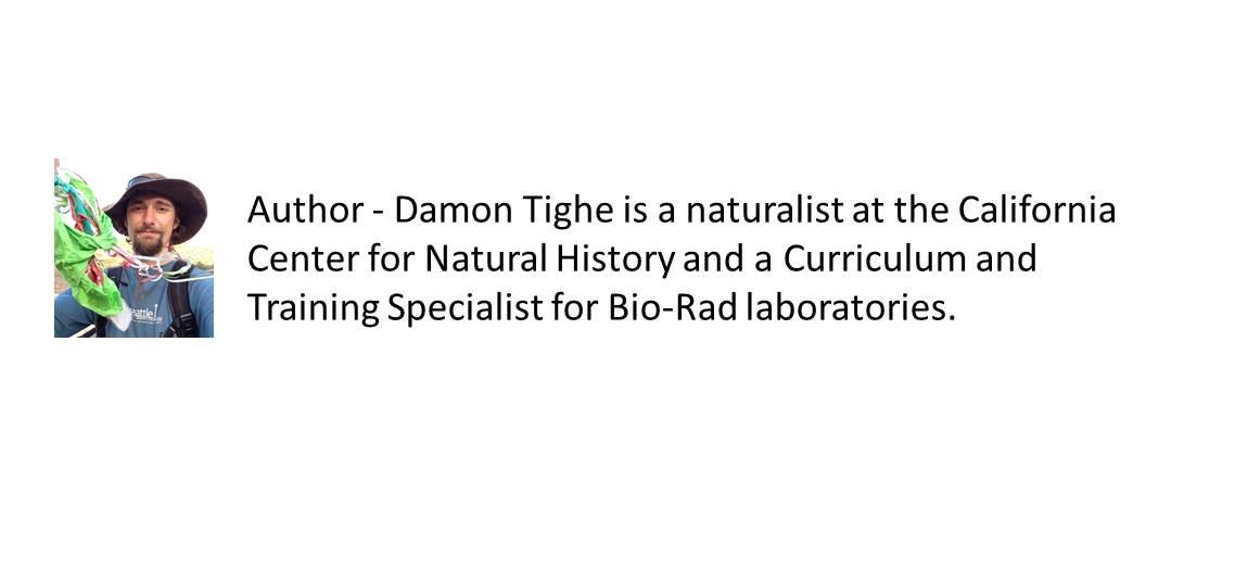 Author Damon Tighe.jpg