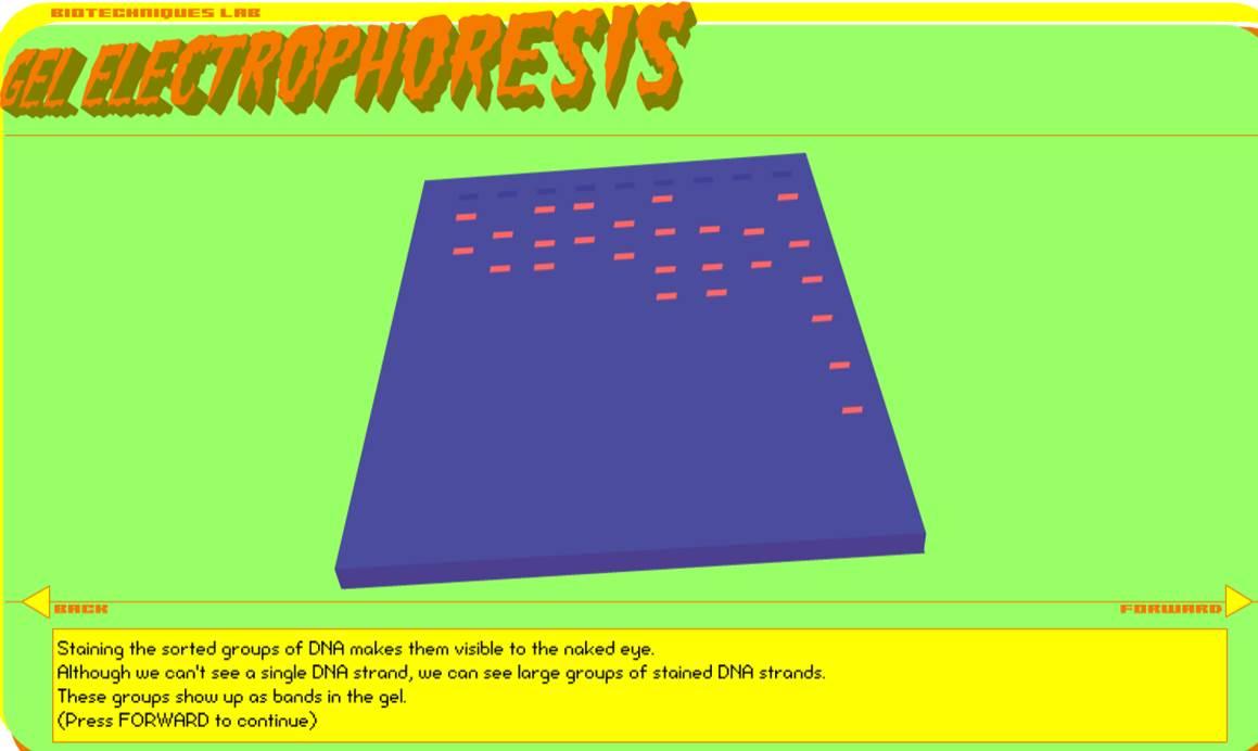 elecctrophoresis.jpg