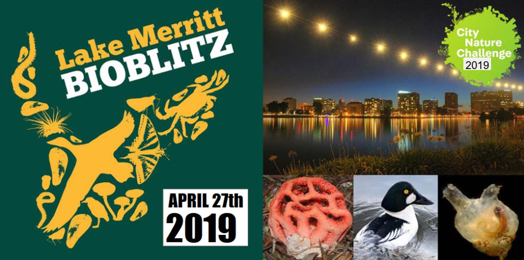 2019 LM bioblitz banner.jpg