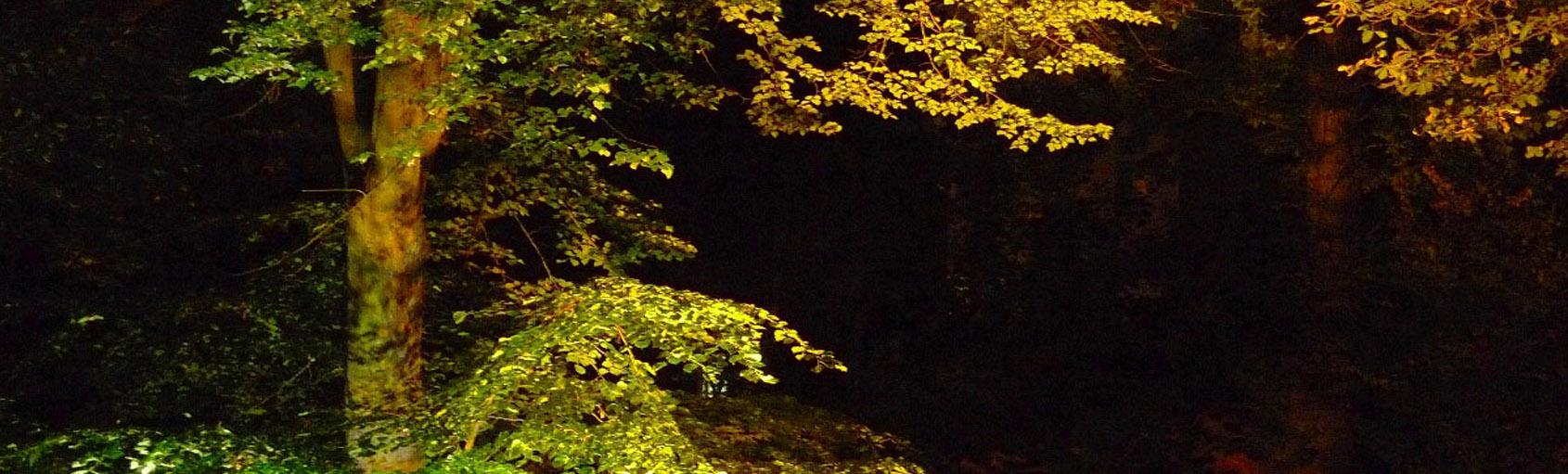 סדנת נוף לילה.jpg