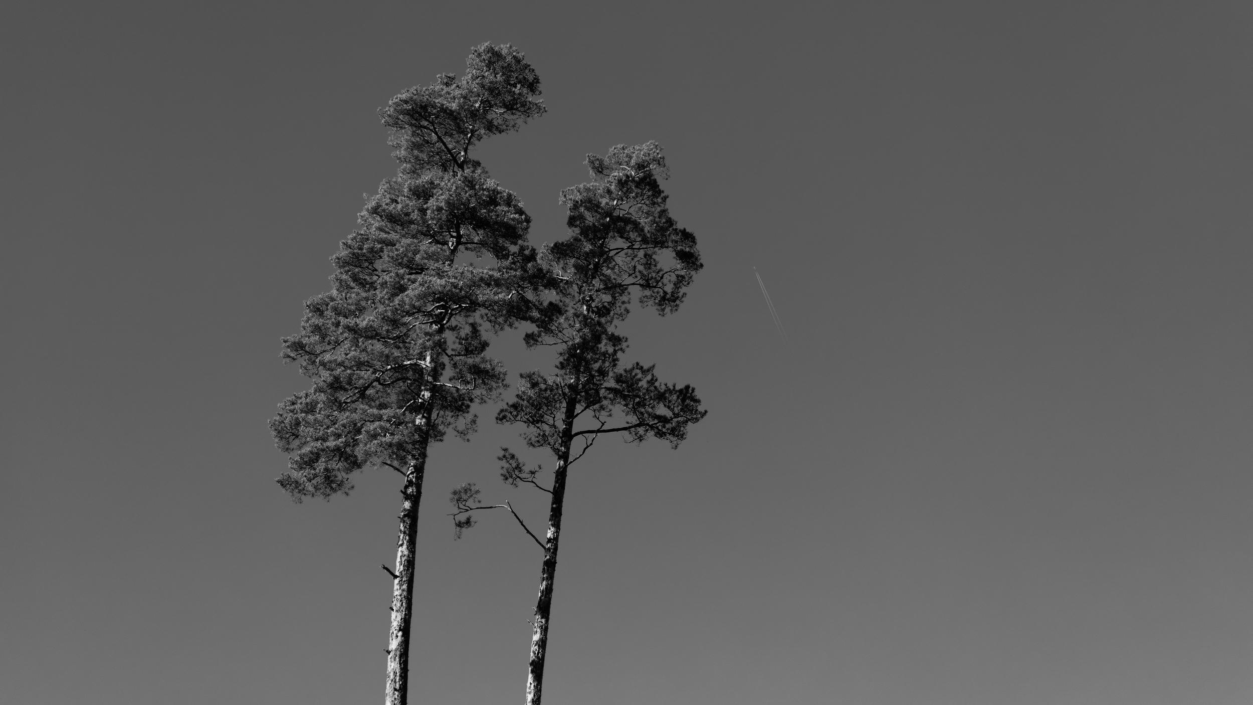 Barndomens träd