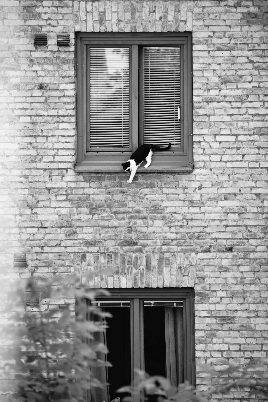Katten i lägenheten mitt emot