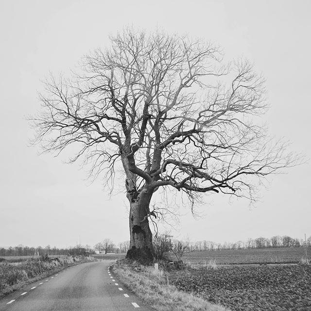 På väg mot Götet efter en helg i Skåneland. Ivö, Åhus och Vanneberga i vintergrått/sol. Samt en mycket fashionabel bumpersticker på broderns elaka svarta van (som för tillfället står parkerad på vår tomt). #ghost #skaune #pimpmyvan