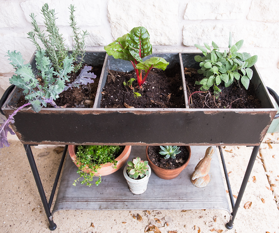 Ideas on Tiny Gardening - Lovely Matters Blog - Heather Walker