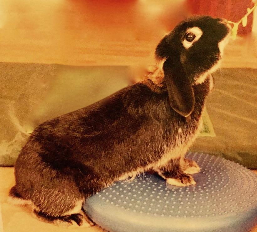 RabbitPhysio (1).jpg