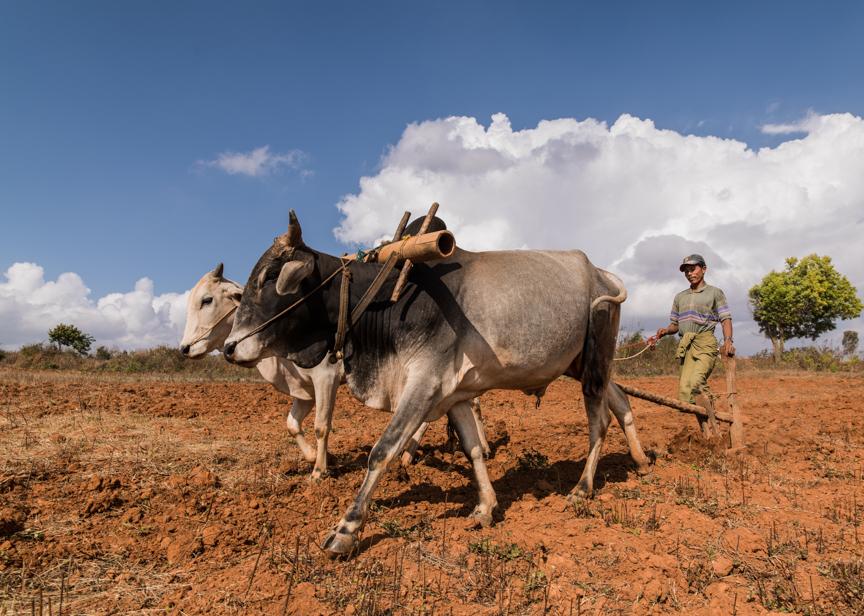 Myanmar copyright maxVmax-5.jpg