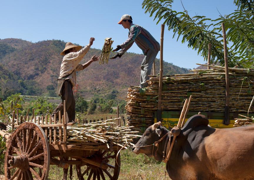 Myanmar copyright maxVmax-17.jpg