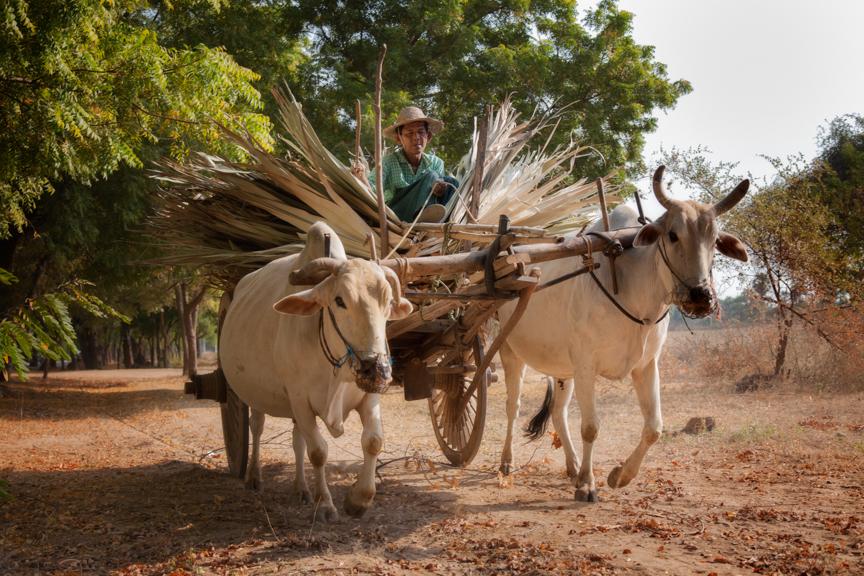 Myanmar copyright maxVmax-32.jpg